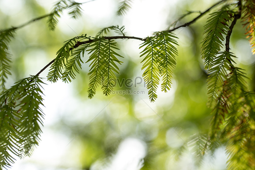 natural green branches and leaves