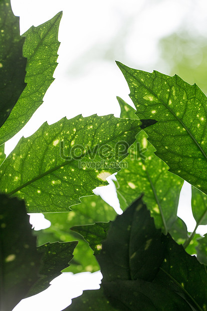 natures green leaves