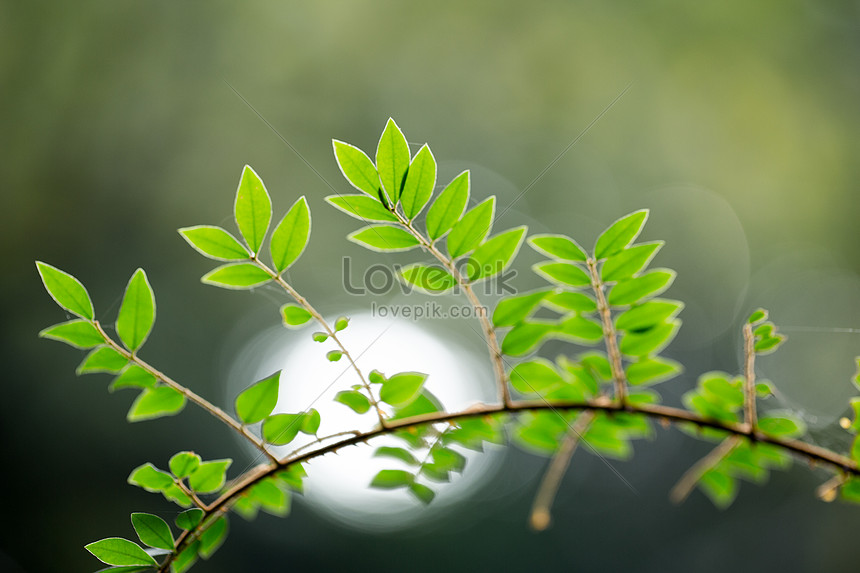 natural plant green leaves