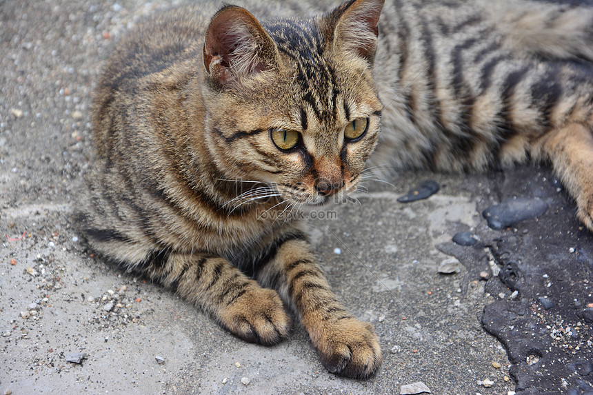 A Naughty Cat Photo Image Picture Free Download 500137314 Lovepik Com