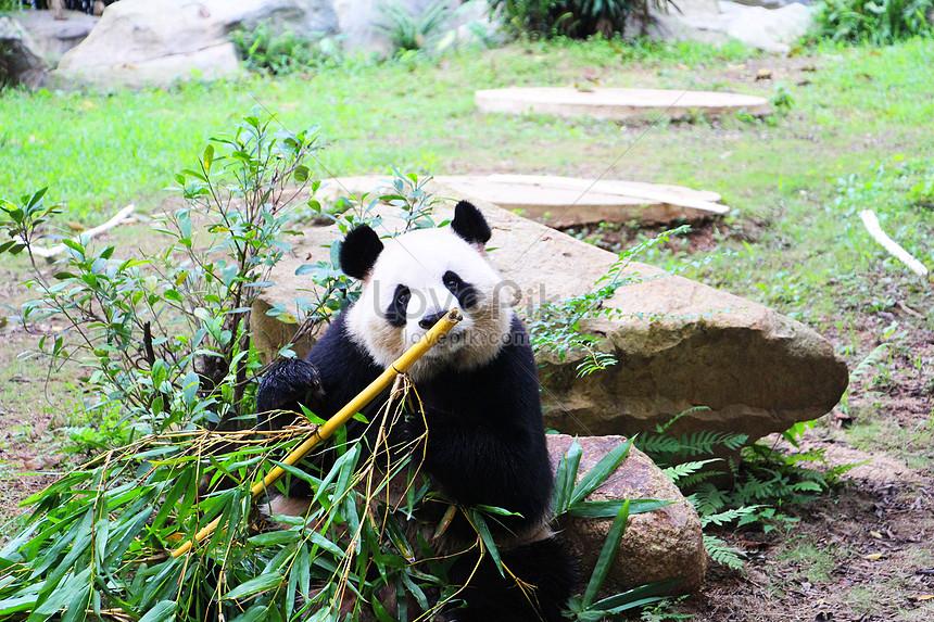 Haiwan Di Zoo Gambar Unduh Gratis Imej 500158277 Format Jpg My Lovepik Com