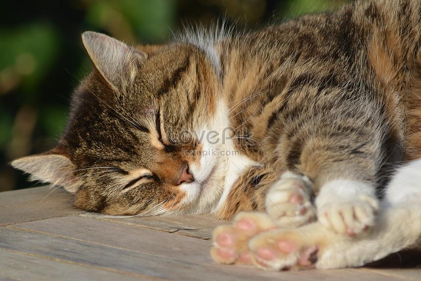 89 Gambar Gambar Kucing Tidur Terlihat Keren