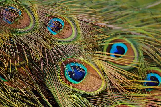 730+  Gambar Burung Merak Yang Indah  Terbaru Free