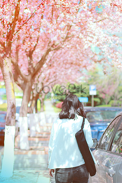 the girl under the cherry blossoms