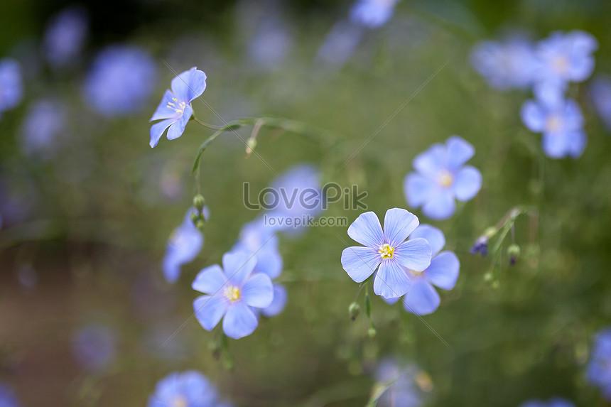 Bahar çiçek Açan çiçekler Resimfotoğraf Numarası 500226377tr