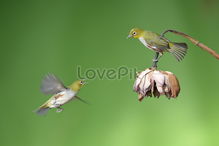5460 early bird photo images free download on m lovepik com