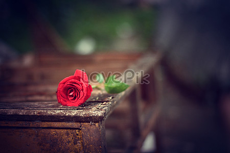 The Black Background Of Romantic Roses Photo Image Picture Free Download 500569747 Lovepik Com
