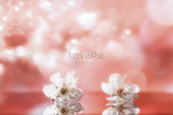Fiori Di Ciliegio Su Sfondo Rosa Immagine Gratisfoto Numero