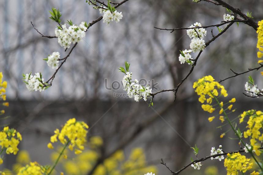 spring flowers bloom