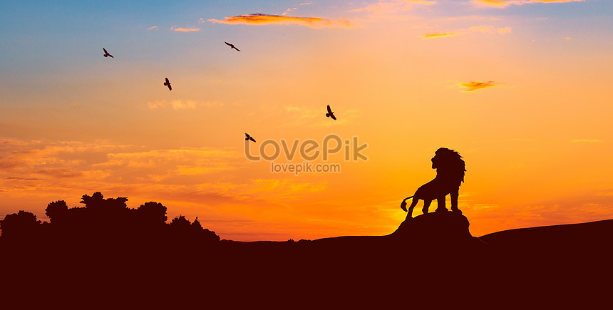 lion silhouette in the setting sun