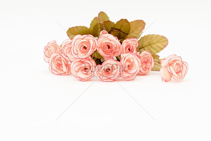 Lovepik صورة Jpg 500373598 Id صورة فوتوغرافية بحث صور الوردة الوردية الورقة على خلفية بيضاء