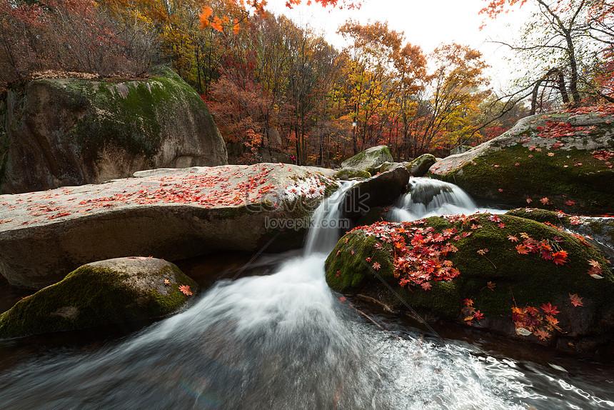 foto de Photo de belles feuilles tombées en automne_Numéro de l ...