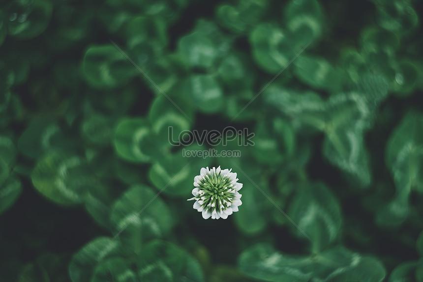 Sfondo Verde Foglia Immagine Gratisfoto Numero 500411196download