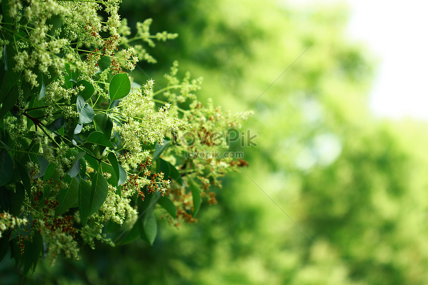 green leaves in summer