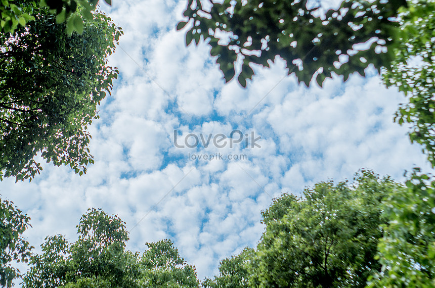 summer leaves and blue sky