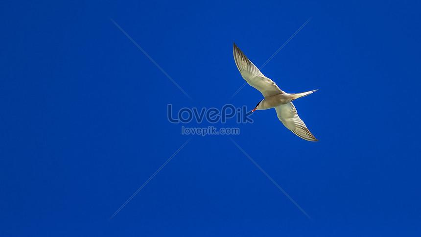 Unduh 68 Foto Gambar Burung Yang Terbang HD Paling Keren Free