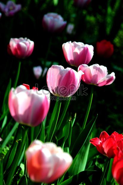 carnations in the garden of the botanical garden