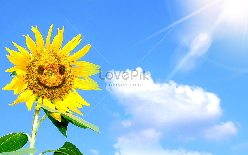 lächelnde sonnenblume die hoffnung darstellt