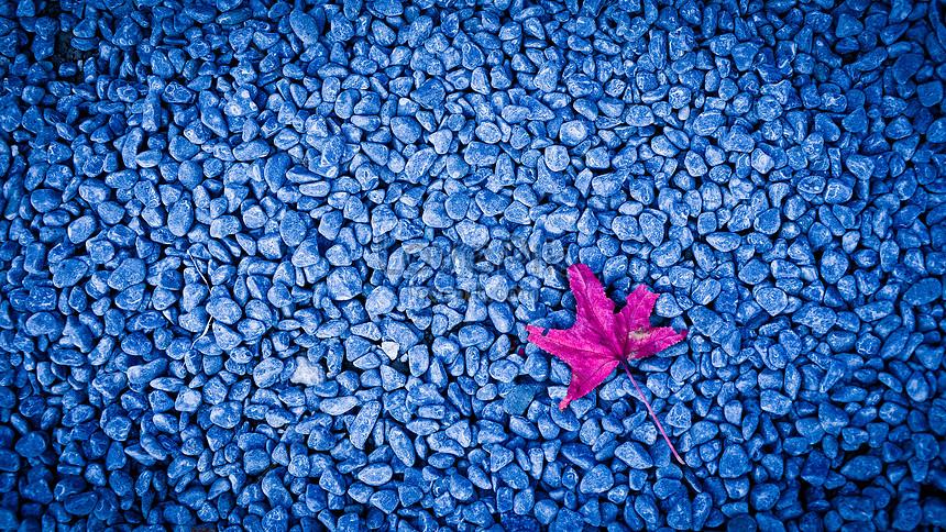 foto de Photo de feuille dérable automne rouge sur le trottoir en pierre ...