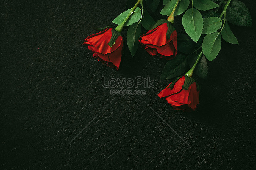 red roses with black background
