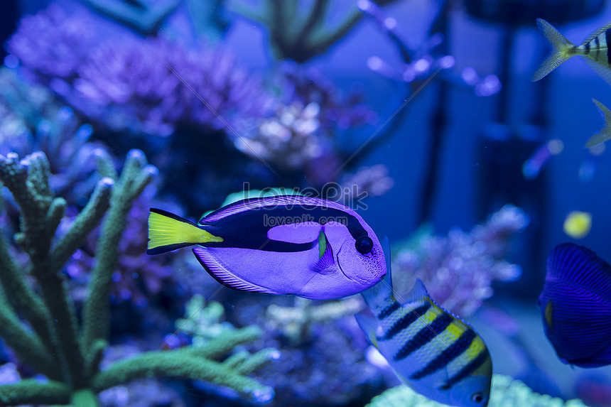 Download 5400 Koleksi Gambar Ikan Di Bawah Laut Terbaru
