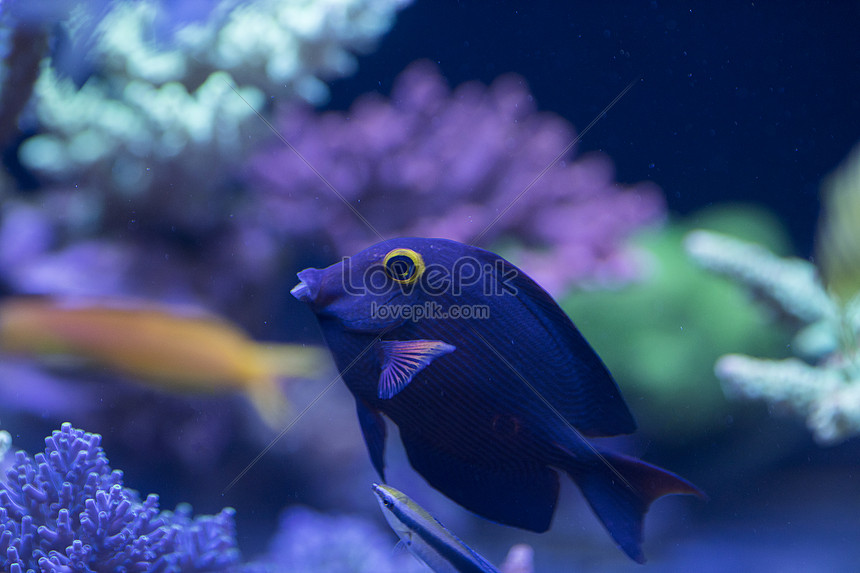 All Kinds Of Fish And Creatures In The World Of The Sea Photo Image Picture Free Download 500616077 Lovepik Com