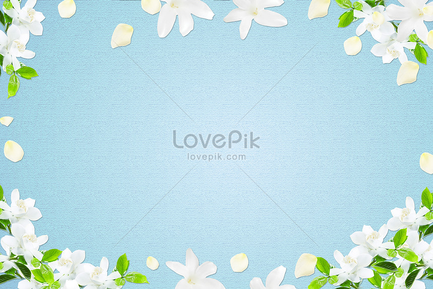 white flowers take a blue background