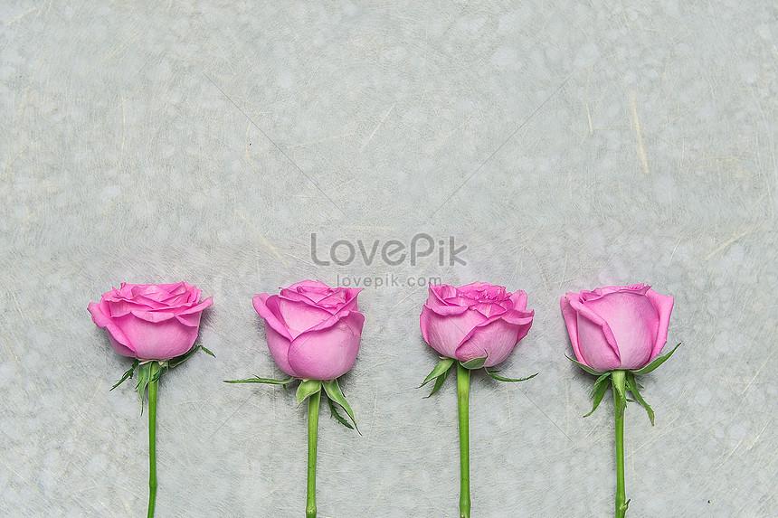 Latar Belakang Bunga Rose Gambar Unduh Gratisimej