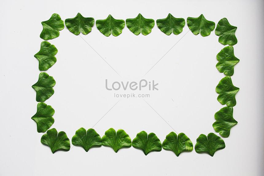 leaves of ginkgo biloba leaves