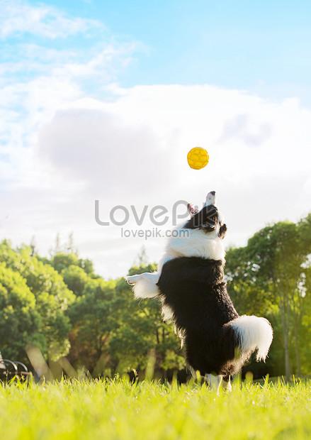 perros atrapando pelotas