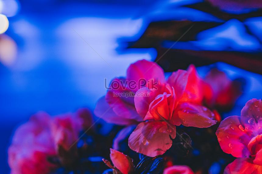 nocturne flower plant light spot