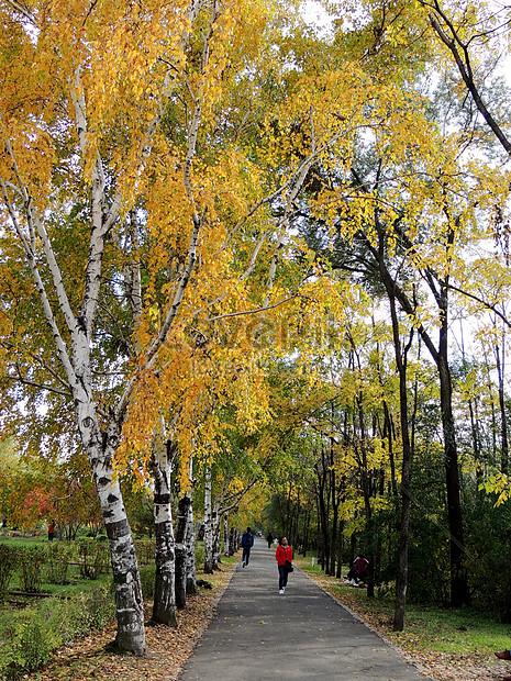autumn scenery in heilongjiang forest botanical garden