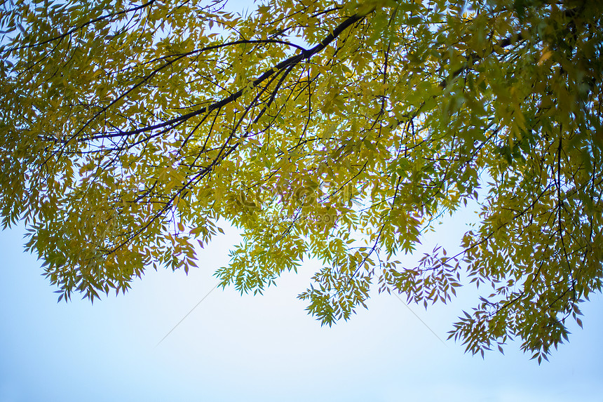 leaves under the blue sky