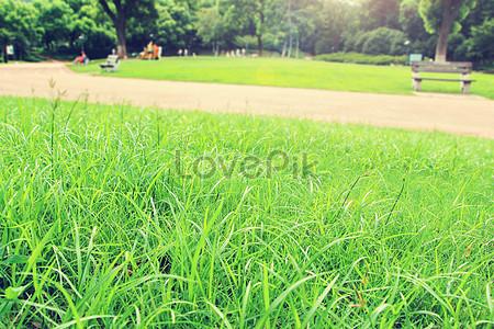 Sfondo Verde Erba Immagine Gratisfoto Numero 500119372download