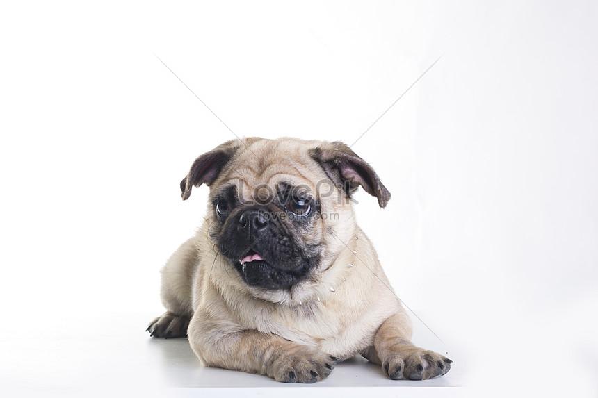 photo of new years dog