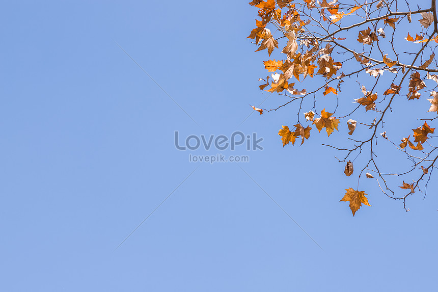 winter leaves and blue sky