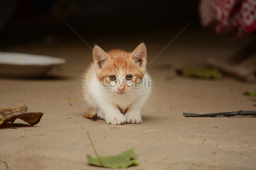 Lovely Cat Photo Image Picture Free Download 500786601 Lovepik Com