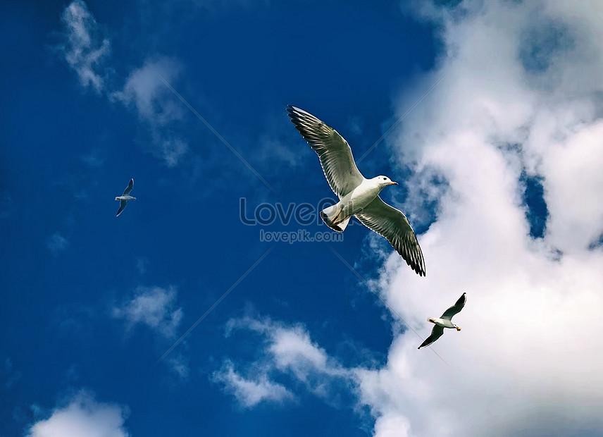 Lovepik صورة Jpg 500812779 Id صورة فوتوغرافية بحث صور ارتفاع الطيور في السماء