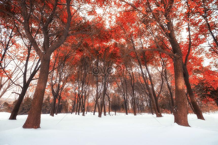 mangrove in snow