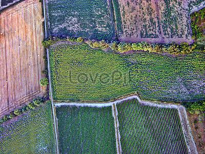 Field of hope, shangqiu, green everywhere, turf png image and.