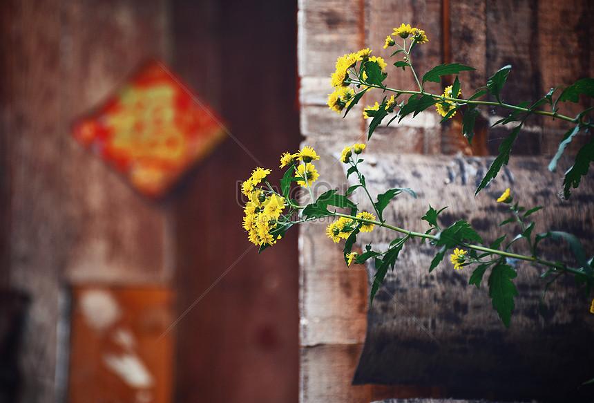 Bunga Melati Musim Dingin Gambar Unduh Gratis Foto 500829633 Format Gambar Jpg Lovepik Com