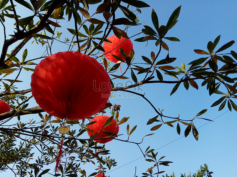the lanterns and the leaves of the blue and blue sky