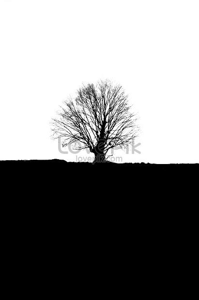 Pokok Mati Hitam Dan Putih Gambar Unduh