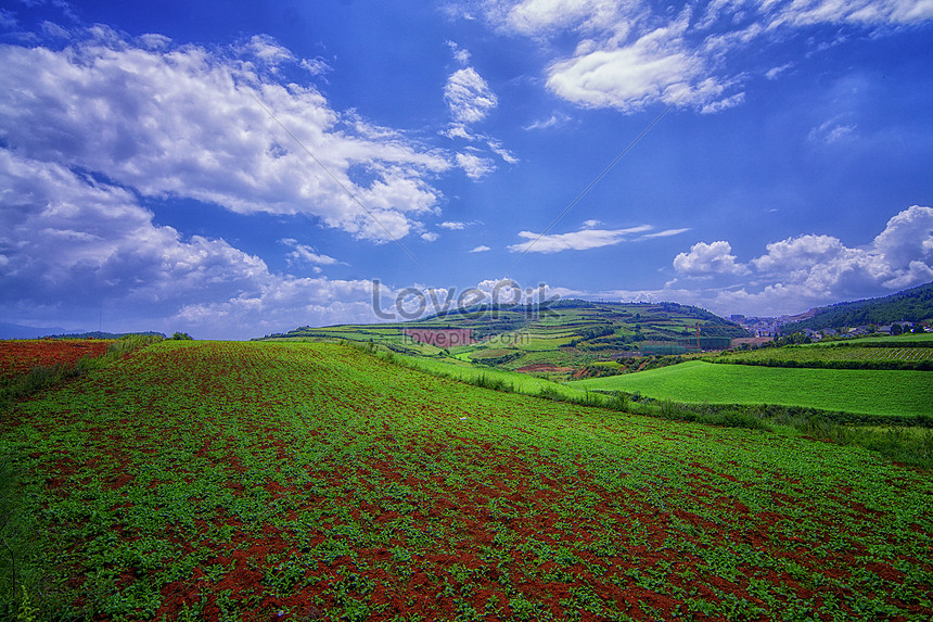 Bidang Pedesaan Gambar Unduh Gratis Foto 501033941format
