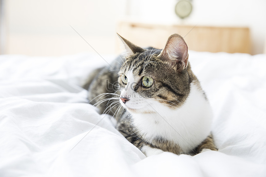A Lovely Cat Photo Image Picture Free Download 501043507 Lovepik Com