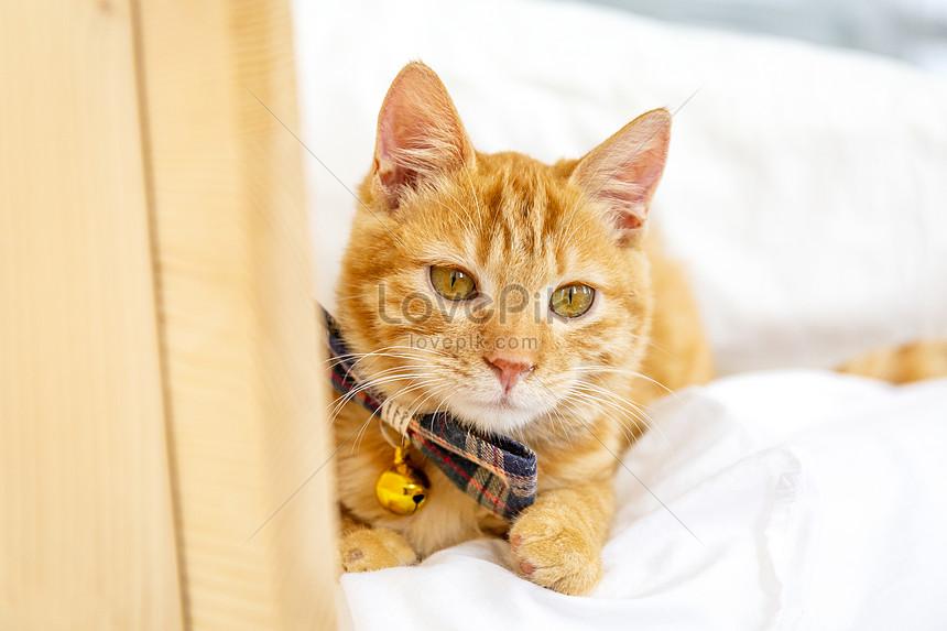 Meow Star Orange Cat Photo Image Picture Free Download 501089686 Lovepik Com
