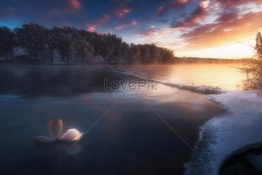 dream swan lake