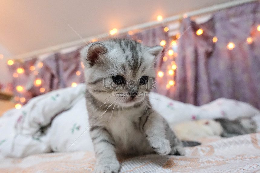 Young Cat Photo Image Picture Free Download 501182932 Lovepik Com
