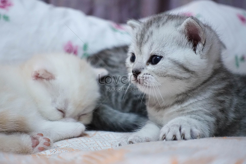 Cute Young Cat Photo Image Picture Free Download 501190891 Lovepik Com