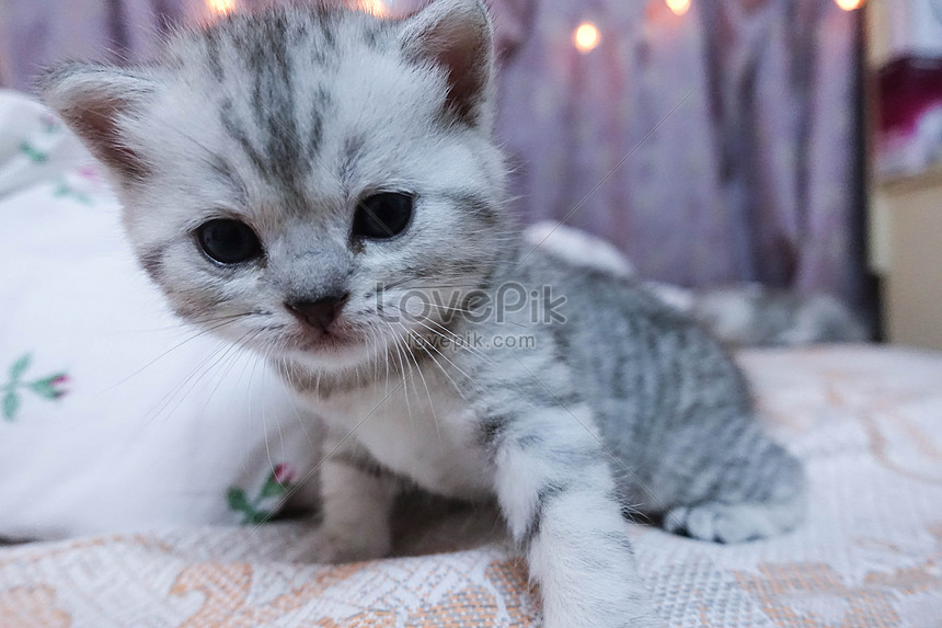 Unduh 100+  Gambar Kucing Yang Comel Paling Lucu